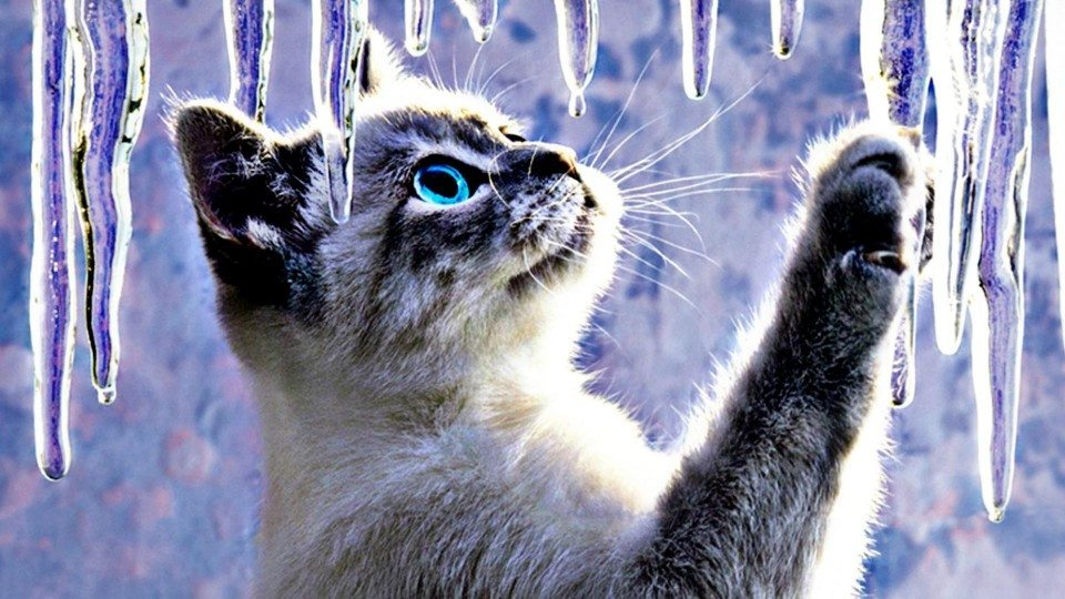 960x540 Animals Cats Abstract Artistic Ice Cute Desktop Background